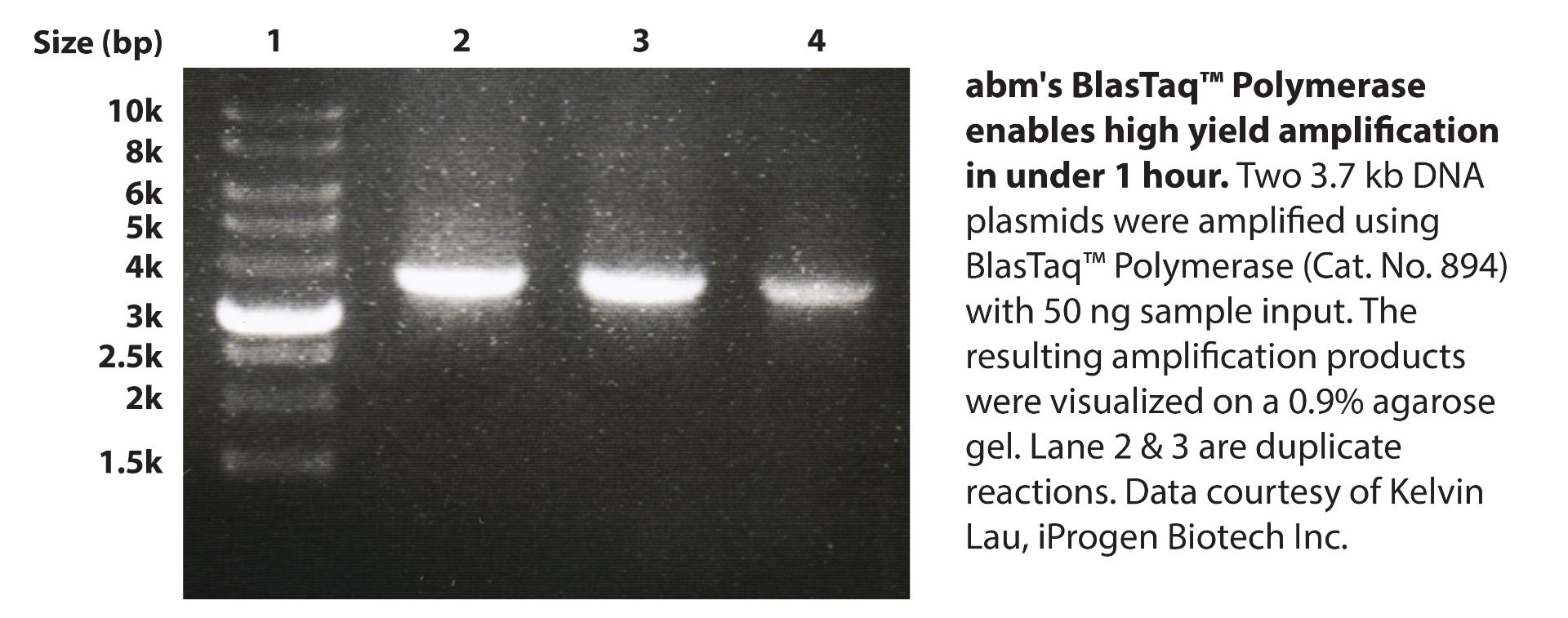 Blastaq Polymerase Customer Data Kelvin Lau Iprogen