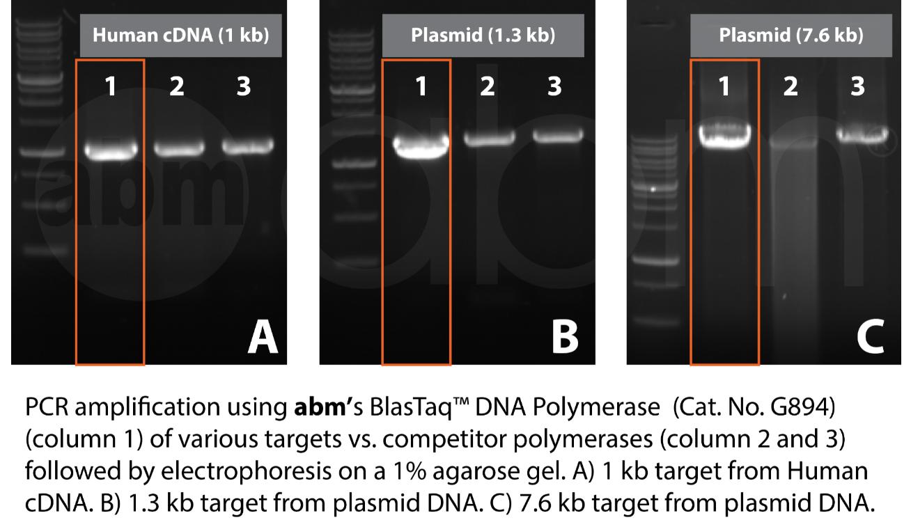 Blastaq Polymerase Various Targets