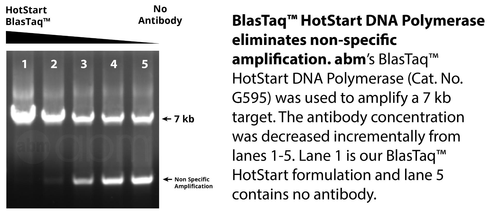 G595 Blastaq Hotstart Dna Polymerase Data1 1 2