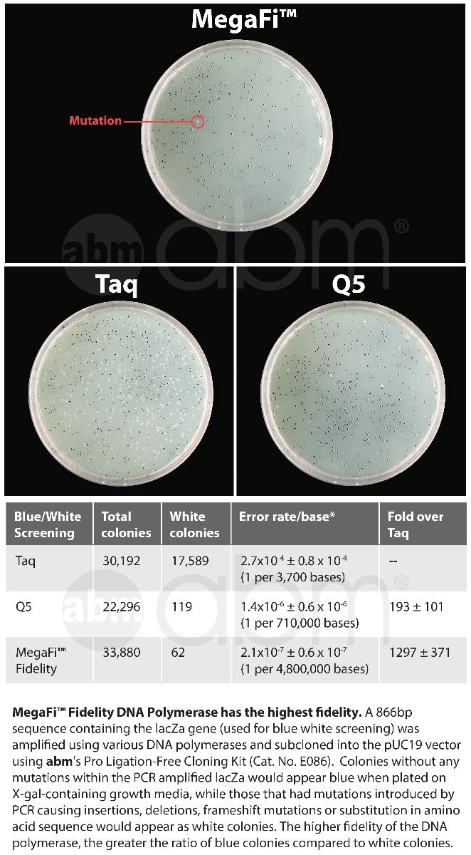 G896 Megafi Fidelity Dna Polymerase Data2 2