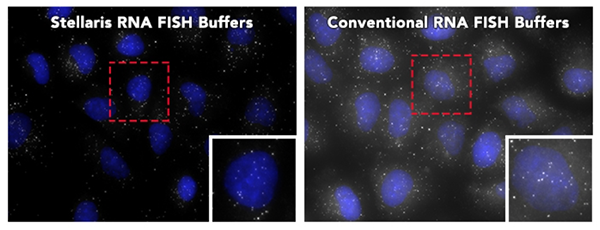 Stellaris Rna Fish Buffers